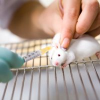 Animal testing for cosmetic purposes